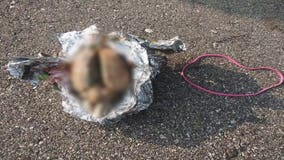 Man finds apparent brain on Racine beach: 'What is this?'