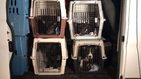 Animals displaced by Hurricane Sally brought to SPCA Tampa Bay