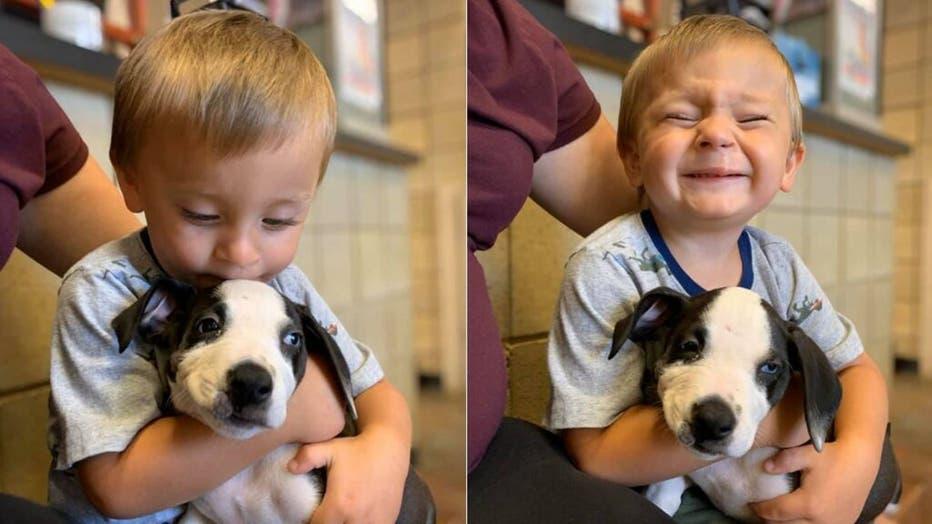 Bentley-puppy-2-Jackson-County-Michigan-Animal-Shelter.jpg