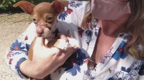 GoFundMe started for nine-week-old puppy with serious injuries