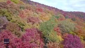 Drone footage shows beautiful fall foliage in Potter County