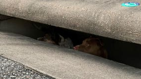 Hutto Fire Rescue, Hutto PD rescue two dogs from storm drain
