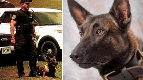 Police dog dies after falling down elevator shaft while searching for burglary suspects