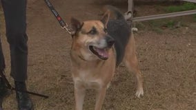 Austin Pets Alive! raising money to help pets most at risk for euthanasia