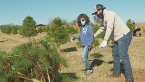 Elgin Christmas Tree Farm a holiday tradition for some