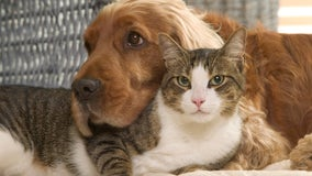 Pet medical insurance provider's list of top names for pets in 2020