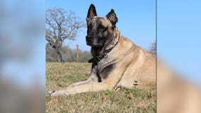 Lobos, retired Fayette County K-9, diagnosed with cancer