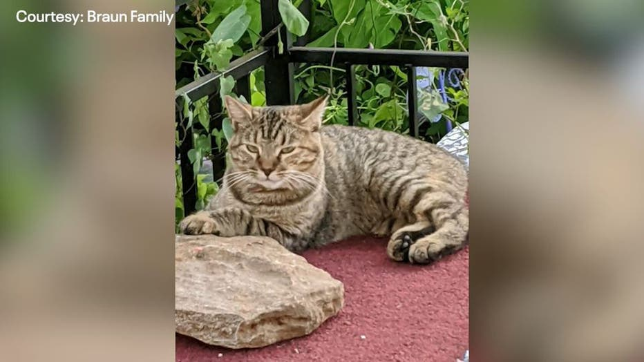 Cat Walks 228 Miles Back Home