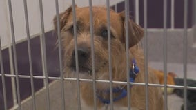 Wilco shelter at capacity following increase in surrenders and strays