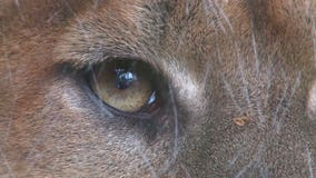 Woodcreek warning residents about possible mountain lion in area
