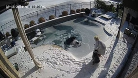 'Watch your pets': Man plunges into frozen pool to rescue dog who fell through ice