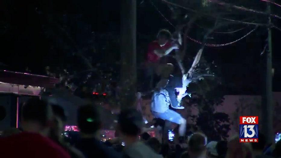 soho-tree-climber.jpg