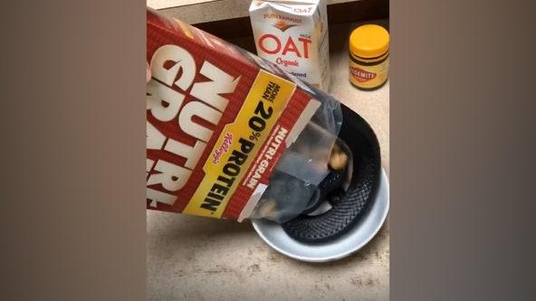 Australian man's cereal contains a serpent surprise