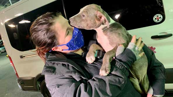 22 dogs rescued from freezing Texas temperatures arrive in DC area