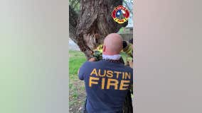 'NOT an April Fools' Day joke': AFD saves squirrel stuck in tree