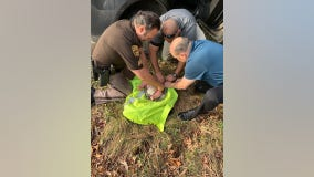 Baby rescued after being found in Michigan woods