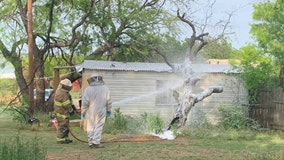 Aggressive swarm of bees attack and kill man