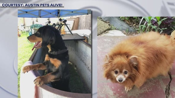 Pets in need of home after owner dies in South Austin crash