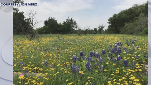 Austin Travels Magazine talks about where to see wildflowers