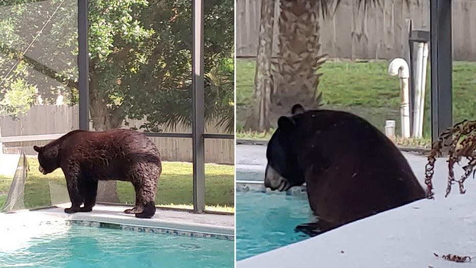 bear-pool-naples-4.jpg