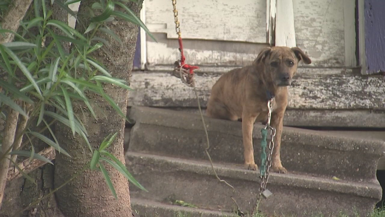 New Texas bill will set stricter rules for dogs left tied outside