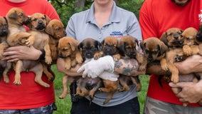 Texas Humane Heroes adoption centers at max capacity