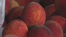 Fredericksburg peaches free from February freeze