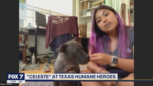 Pet of the Weekend: Celeste