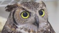 Austin Wildlife Rescue in need of summer volunteers