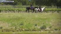 Flat Creek Estate Winery and Vineyard in Marble Falls