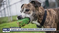 Pet of the Weekend: 'Capo' at Austin Animal Center