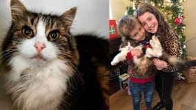 Family 'absolutely shocked' when cat they thought they cremated returns home