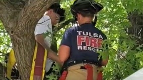 Rescue attempt leaves cat and owner stuck in tree
