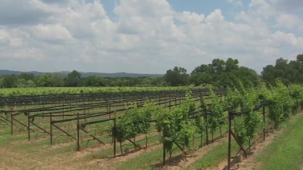 New wine labeling law will 'guarantee authenticity of Texas wine'