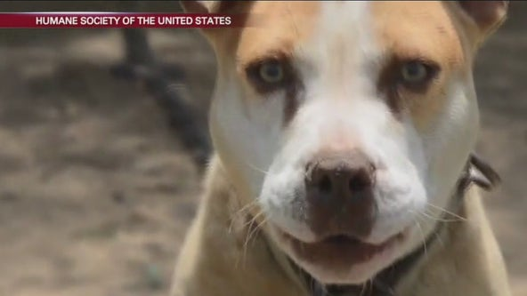 Abbott vetoes bill protecting dogs left outside in harsh conditions