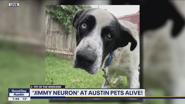 Pet of the Weekend: Jimmy Neuron