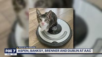 Pet(s) of the Weekend: Aspen, Banksy, Brenner and Dublin