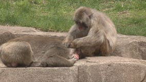COVID vaccine for zoo animals in Wisconsin