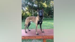 Savannah police K-9 dies in officer-involved vehicle crash