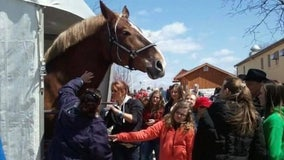 World's tallest horse dies in Wisconsin at age 20