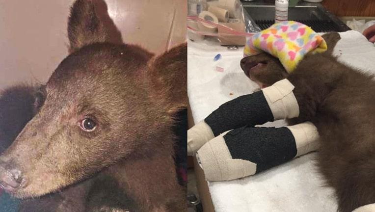 bear cub injured wildfire