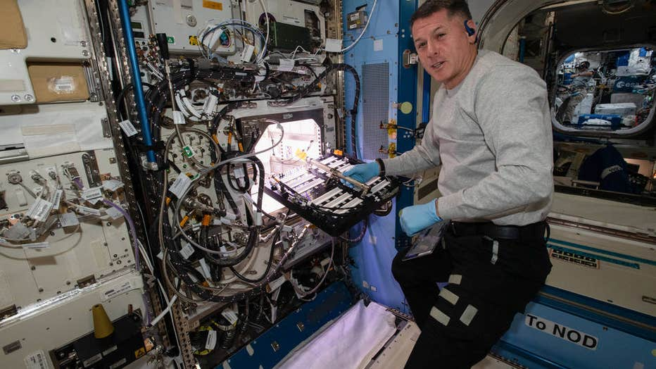 NASA grows chile peppers