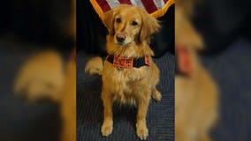 TSA's 2021 Cutest Canine announced: Meet 4-year-old Alona