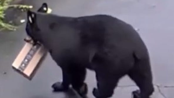 Bear swipes Amazon package from Connecticut home