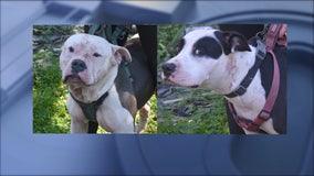 Dogs maul intruder found dead by Coweta homeowner, investigators say