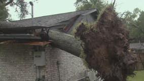 High winds from Nicholas knocks tree through Baytown widow's home