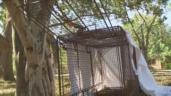 Dog that attacked woman has been caught, victim pushing for changes