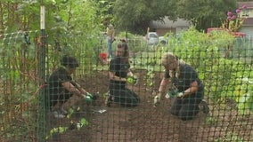 Love, Tito's, Austin Parks Foundation team up for garden projects