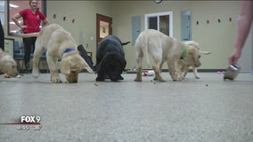 Can-Do Canines puppies move on to next stage of service dog training