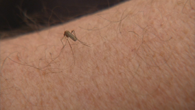 Pest expert: Winter's deep freeze won't save us from summer mosquitos